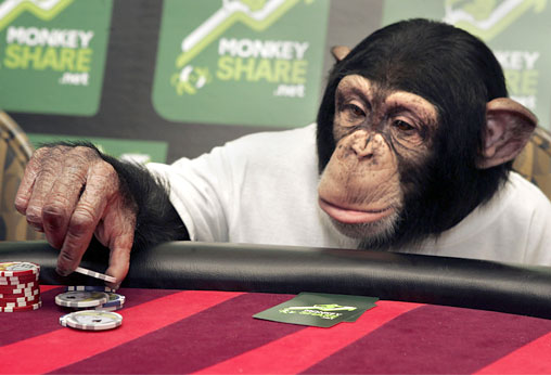 Cuddles the poker playing primate
